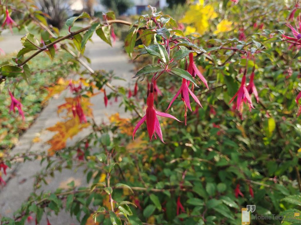 Fuscia photo